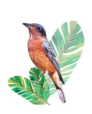 illustration d'un oiseau