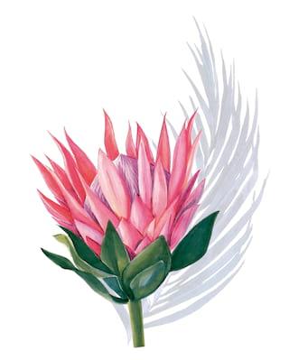 Illustration de la flore indigène