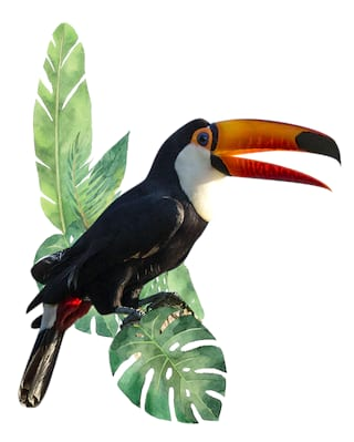 Illustration of a toucan