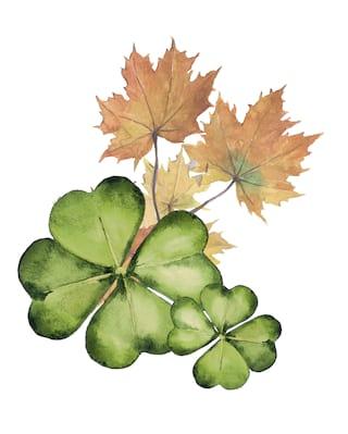 Illustration of four-leaf clovers