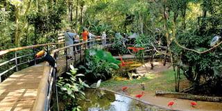 bird park activity iguassu falls