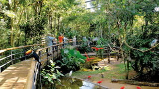 Tourists walking on a raised plank path in a jungle park filled with colourful birds