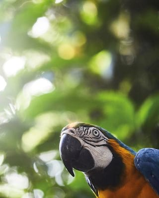 View of a parrot from below with the lush jungle canopy above
