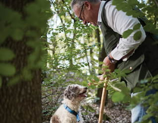 Truffle Hunting, dog, forest
