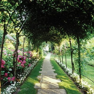 Stone path under an arched tunnel of foliage lined with pink and white roses