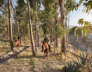 Peruvian Paso Horse Riding, Colca Canyon