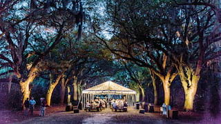 Underlit trees lining a path towards people celebrating under a fairylight-lit marquee