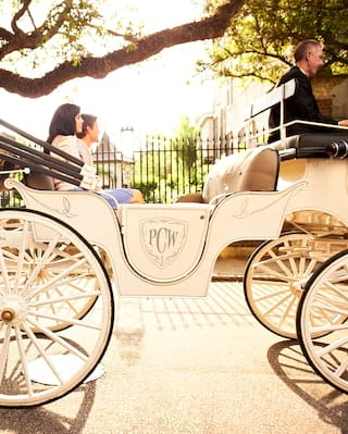 White horse-drawn carriage on a leafy Charleston street