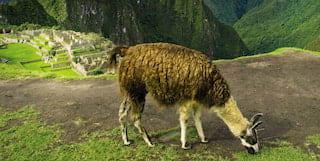 Peru Guide