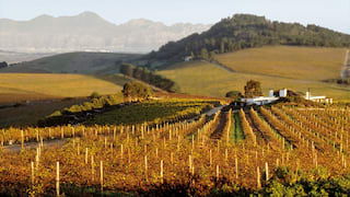 Rows of vines stretching across rolling hills with Table Mountain in the background