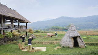 Farmers collecting straw on a rural Laotian farm