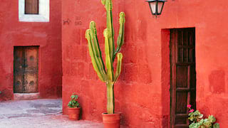 Large potted cactus against a vibrant raspberry red stone wall