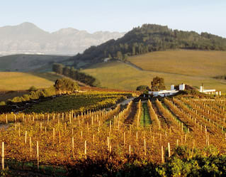 constantia winelands, south africa