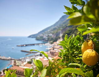 Amalfi Lemon Tour