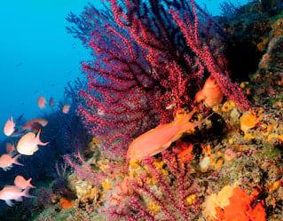 Protected Marine Area, Scuba Diving in Portofino