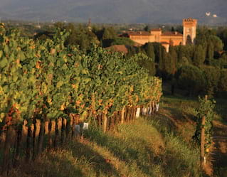 Collio Wine Tour, Venice