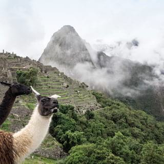 Two alpacas with the Machu Picchu citadel shrouded in cloud as a backdrop