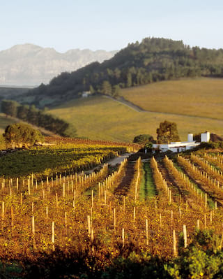Wine tour in South Africa