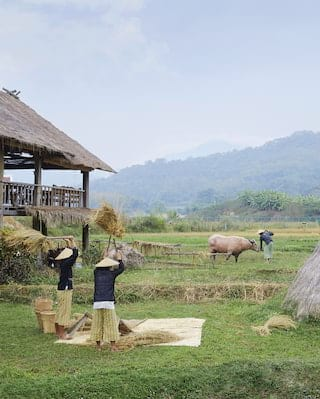 Rice farm experience in Luang Prabang
