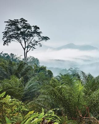 View from a mountain top across a palm-tree jungle with blue mountains beyond