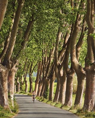 Lady cycling along an idyllic small road lined with tall plane trees