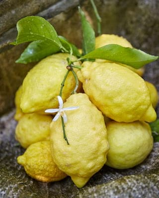 Amalfi lemon farm tour