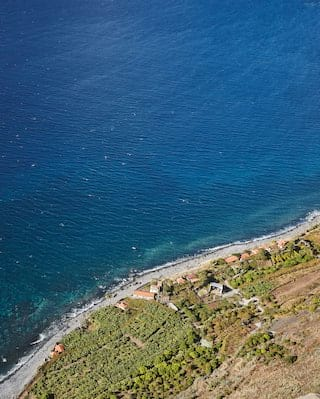 Birds-eye-view of lush shrubs on a cliffside overlooking the clear blue sea