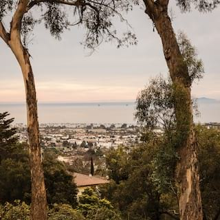 Two tall trees with views of Santa Barbara and the Pacific Ocean beyond