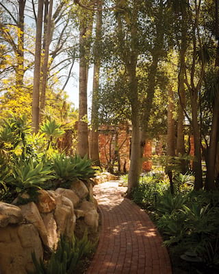 Red-brick garden path winding among tall trees and succulent plants
