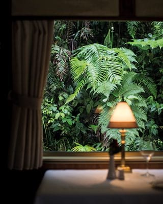 View through a lamplit train carriage of lush jungle foliage beyond