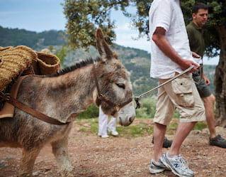 Donkey Trail Tours