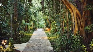 Tunnel-view of a stone-built path under arching palms in evening light