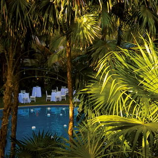 Outdoor hotel pool viewed through tall palms in evening light