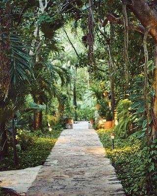 Iguana in tropical foliage