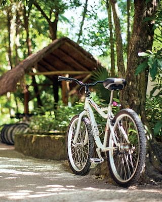 Lone bike leaning against a jungle tree on a shaded path
