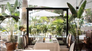 Bright restaurant with potted palms and a glass wall with gardens beyond