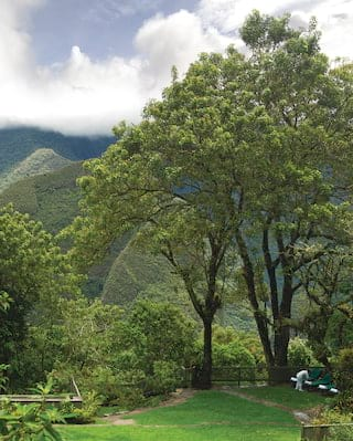 Tall trees overlooking a jungle coated mountain top shrouded in clouds
