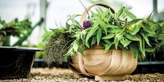 Raymond Blanc Gardening School