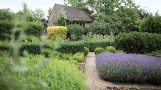 Garden path winding among lavender flowers and shrubs