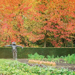 Bronze statue of a scarecrow among vegetable patches surrounded by trees