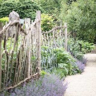 Garden path lined with foliage and lavender growing through a wicker fence