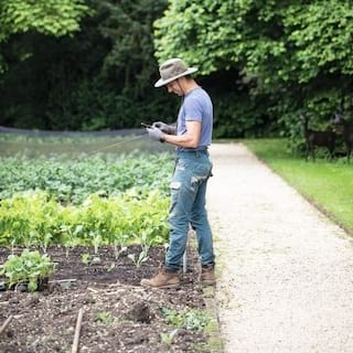 Gardener standing in a vegetable patch next to a garden path