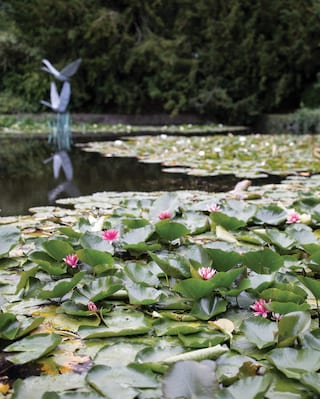 Lilies stretching across a garden pond with a swan statue in the centre