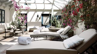 Row of lounge chairs in sunlight-filled conservatory filled vines and flowers