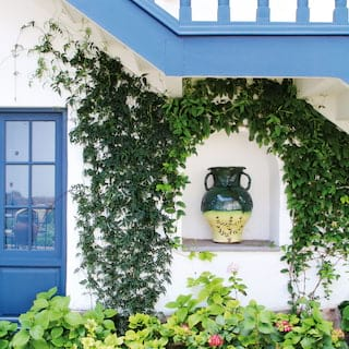 Green glazed jar in the alcove of an external wall, surrounded by vines