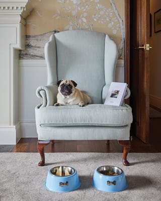 A happy-looking pug dog relaxing on a pale blue armchair next to a book