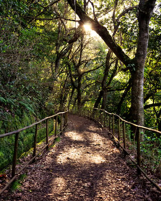 Pathway lined with wooden rails in a dense tropical woods