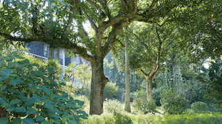 Tall trees among lush plantations and flowers in an oriental garden
