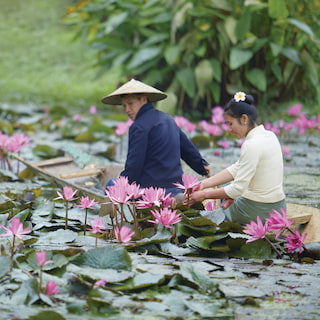 Man and woman in a rowing boat picking pink lilies from a lily pond