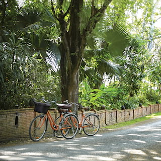 Two bikes leaning against a tree beside a walled path